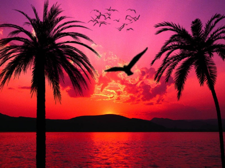 tropical_sunset_by_sheelal416